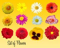 Set of flowers stock illustration