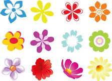 Set of  flowers. Set of 12  flowers on white background Royalty Free Stock Images