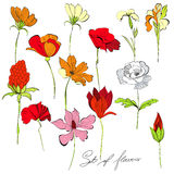 Set of flowers. Set of a lot of beautiful flowers Royalty Free Stock Images