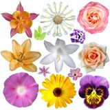 Set of flowers. Set of colorful summer flowers Stock Photography