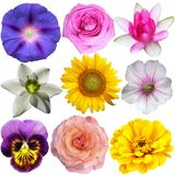 Set of flowers Stock Photography