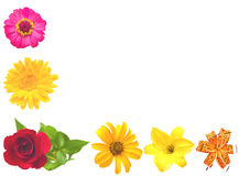 A set of flowers. Stock Photography