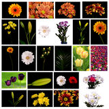 Set of flowers. On Black and white background. Close-up Stock Image