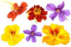 Set of flowers Stock Photos