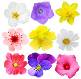 Set of flowers Royalty Free Stock Photo