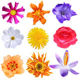 Set of flowers royalty free stock photos