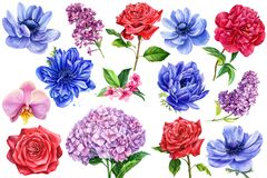 Set of flowers , anemones, peony, orchid, hydrangea, peony, lilac, watercolor illustration