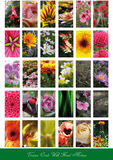 Set of flowers backgrounds Stock Photos