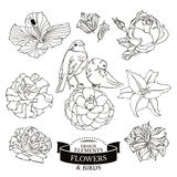 Set of flowers and birds Stock Images
