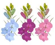Set of 3 flowers. Blue, purple and crimson. Delphinium flowers. Set of three flowers. Blue, purple and crimson. Delphinium flowers. On a white background Stock Photos