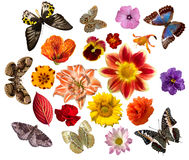 Set of flowers and butterflies Stock Photo