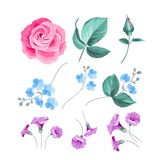 Set of flowers. Royalty Free Stock Photos