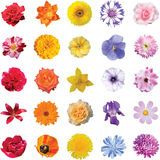Set of flowers 5 colors 5 pieces of each color isolated on white Royalty Free Stock Photography