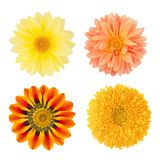 Set of flowers with dahlias, gazania and sunflower. As design elements. Royalty Free Stock Photography