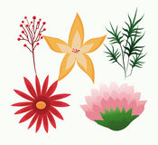 Set flowers delicate foliage leaves botany Royalty Free Stock Image