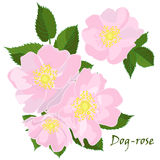 Set of flowers dog-rose with leafs in realistic hand-drawn style. Vector illustration royalty free illustration