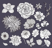 Set of flowers. Floral elements. Royalty Free Stock Image