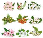 Set of flowers on fruit trees Royalty Free Stock Images