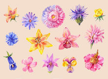 Set of flowers head in watercolor. Hand drawn painting, isolated Stock Photo