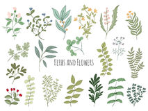 Set of flowers and herbs Stock Images