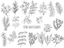 Set of flowers and herbs royalty free stock photography