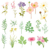 Set of Flowers and Herbs Royalty Free Stock Images