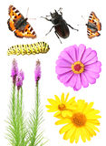 Set of flowers and insects Stock Photos