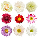Set of flowers. Isolated on white Stock Image