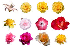 Set of flowers isolated on a white royalty free stock photo