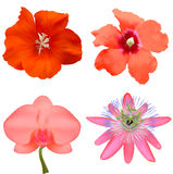 Set of flowers. Royalty Free Stock Image