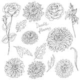 Set of flowers  and leaves sketch Stock Images