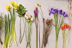 Set of flowers for making bouquet with instrument royalty free stock photography
