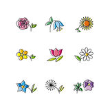 Set of Flowers Royalty Free Stock Photography