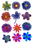 Set of Flowers painted in watercolor Royalty Free Stock Photo