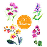 Set of flowers. Painted in watercolor. Royalty Free Stock Photo
