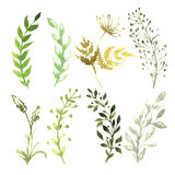 Set of flowers painted in watercolor on white. Paper Stock Photo