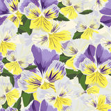Set of flowers pansies with leafs in realistic hand-drawn style Stock Photography