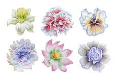 Set with flowers. Pansies. Narcissus. Marigold. Peony. Lotus. Watercolor illustration. Royalty Free Stock Photos