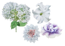 Set with flowers. Petunia. Dahlia. Hudrangeya. Watercolor illustration. Set with flowers. Petunia. Dahlia. Hudrangeya Watercolor illustration Hand drawn Stock Image