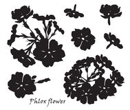 Set of flowers phlox with leafs. Black silhouette on white background Royalty Free Stock Images