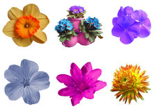 Set flowers Royalty Free Stock Images