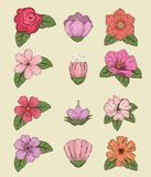Set flowers plants with leaves and petals style vector illustration