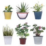 Set of flowers in pots Royalty Free Stock Photos