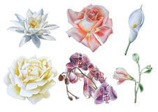 Set with flowers. Rose. Lily. Calla. Orchid. Watercolor illustration. Royalty Free Stock Photo