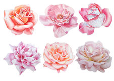 Set with flowers. Rose. Peony. Watercolor illustration. Royalty Free Stock Images