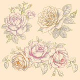 Set of Flowers. Roses. Multicolor Drawing. Royalty Free Stock Images