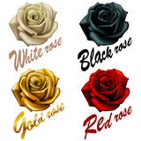 Set  flowers roses. red black white gold. inscription emblem. Stock Photography
