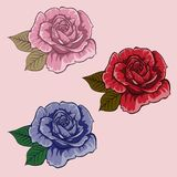 Set of flowers. Set of roses. Red rose. Blue rose. Pink rose. Isolated flower. S on light background Royalty Free Stock Image