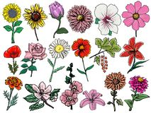 Set of flowers Stock Photo