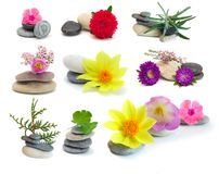 Set flowers and stones Royalty Free Stock Photography
